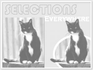 SelectionsEverywhere-400-BW
