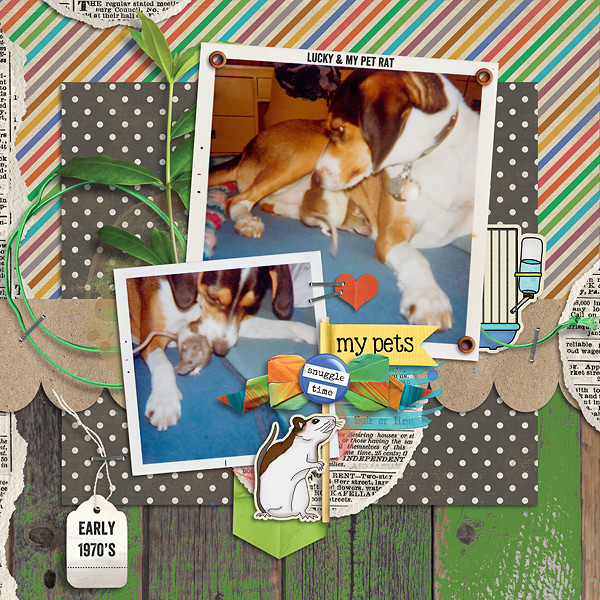 Layout by Tracey Monette