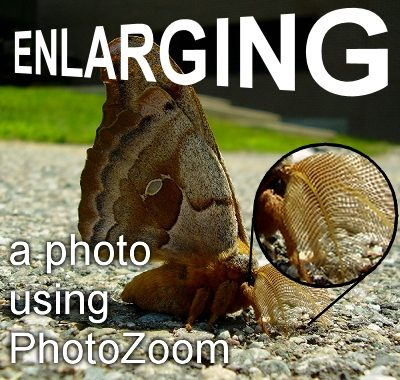 Enlarging A photo using Photozoom