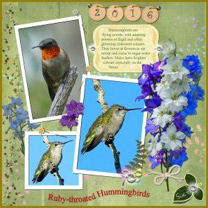 humming-bird-collage