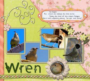 wrens-last-clutch