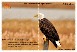 bald-eagle-for-stamp-project-2