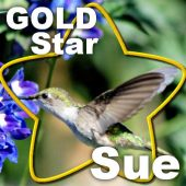 Gold Star  –  Sue