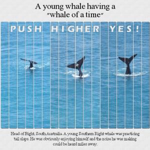 whale-tail-slaps1