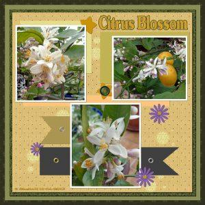 blossoms-resizedsgh-11-04-2017-2