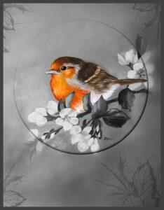 colourfocus-robin-2