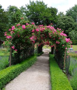 arch-of-roses