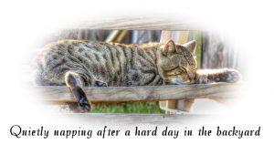 quiet-nap