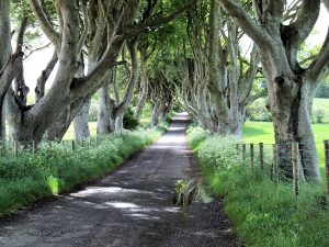 dark-hedges-ireland-original