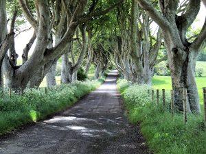 dark-hedges-ireland-puddle-deleted