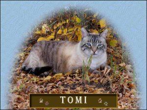 tomi-4
