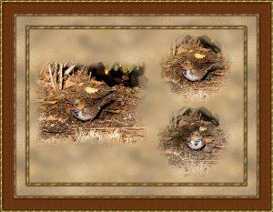 framed-image-amend