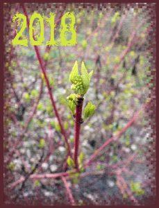 calendar-01-cover1