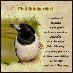 birdchallenge-02