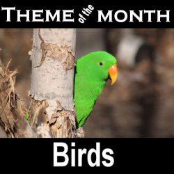 Theme – Birds