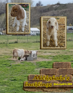 milkshake-2018-sm