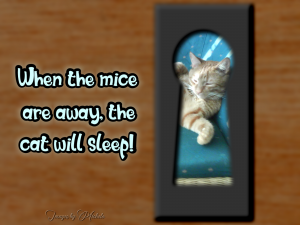 when-the-mice-are-away