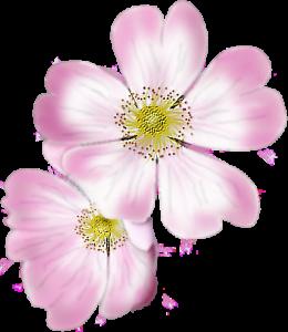 dog-rose-sgh-24-06-2018