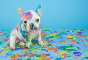 puppy-painted