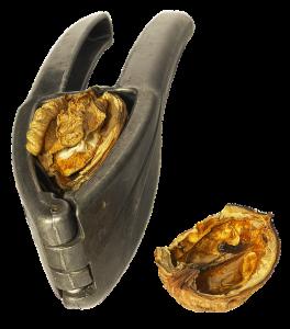 nutcracker-walnut-2876138_640