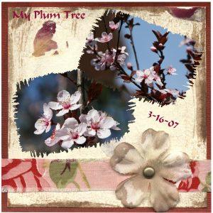 my-plum-tree-3-16-07