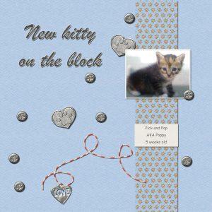 new-kitty-on-the-block1000