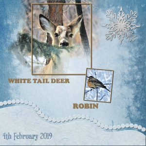 day-1-deer-and-robin-2