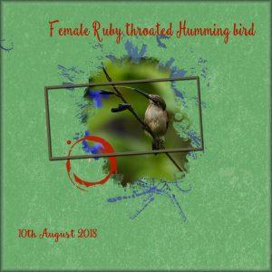 day-2-humming-bird