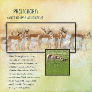 day-3-antelope-herd