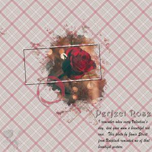 perfect-rose