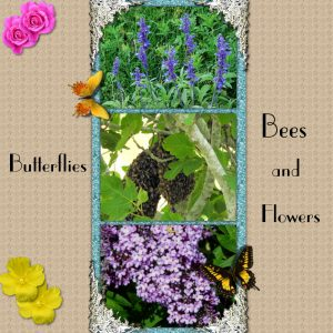 day-5-butterflies-bees-and-flowers