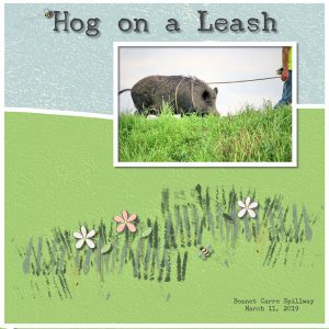 hog-on-a-leash-resized