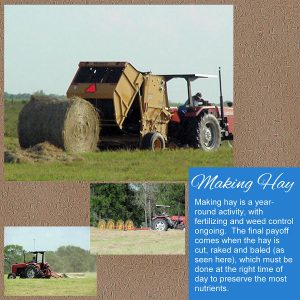 day-2-making-hay-900