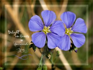 flax-adjustment-layers-background-paper