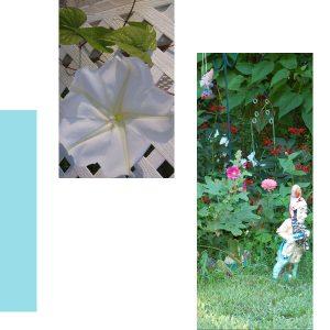 my-garden-2008-pg-5-600