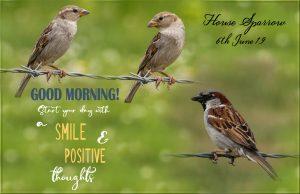 sparrows-house