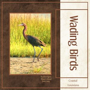 cass-magazinea-00-wading-birds-1000x1000