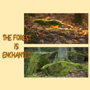 enchantedforest600x600