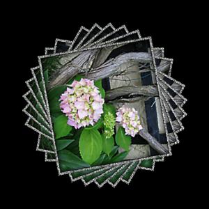 garden-copper-beeches-14-6-09-293aa-open