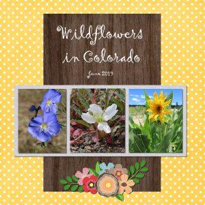 layout3-wildflowers-600px