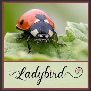 day-1-ladybird-1-2