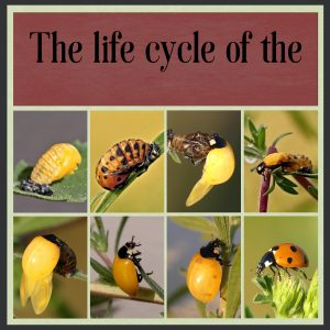 day-1-ladybird-2
