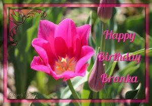 fab-happy-birthday-branka-rajacic-2019