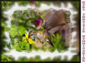 hummingbird-feeding-with-masks