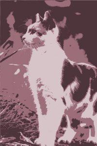 calico-cat-3