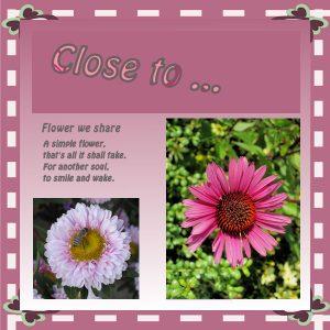 dtc1-1-pink_frame_w