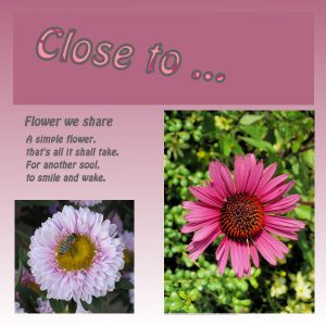 dtc1-1-pink_w
