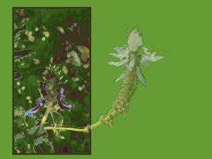 flower_oob_green_w