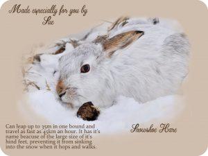 xmas-snowshoe-hare-back