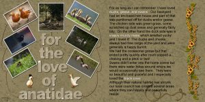 for-the-love-of-anatidae-600